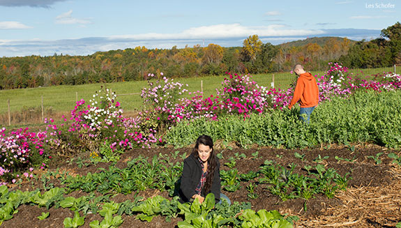 Students harvest crops from Liberty's Campus Garden