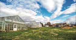 GROWTH — Lynchburg Grows uses both its new and historic greenhouses to grow a variety of produce. Photo provided.