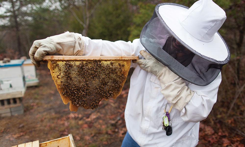 Bees at Liberty University's Morris Campus Garden.