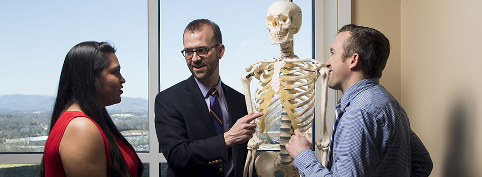 Jason E. Wells, PhD, highlights areas of the human skeletal system.