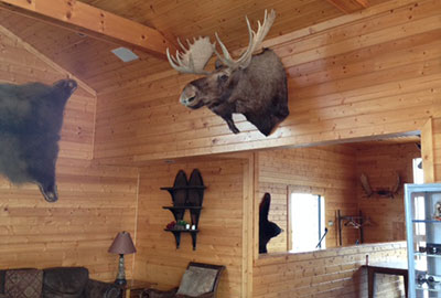 A massive bull moose head, harvested by screenwriter Dan Gordon and donated to Liberty University, is now on display in the Snowflex lodge.